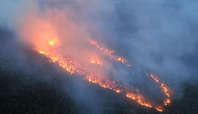 Muğla'da ormanlık iki alanda yangın