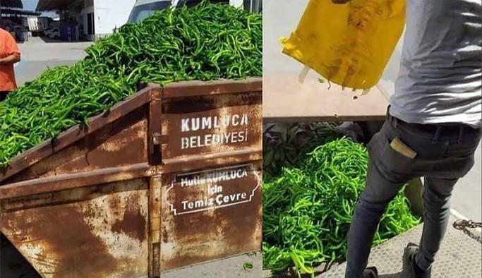 Antalya'da üreticiler tonlarca kilo sebzeyi 'para etmediği için' çöpe döktü