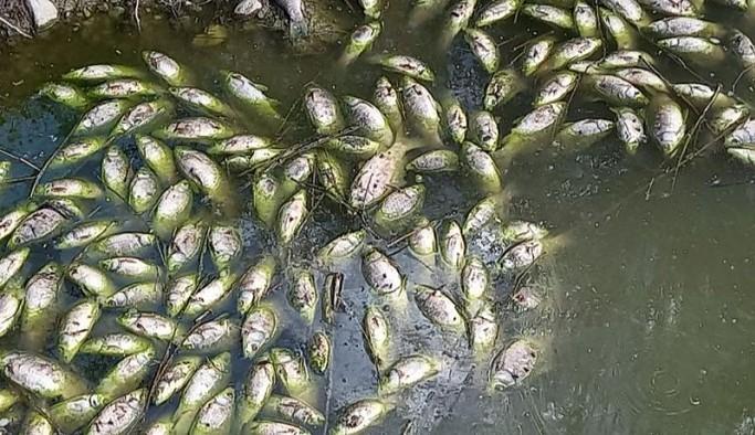 Baraj kapaklarının açılması sonrası binlerce balık öldü