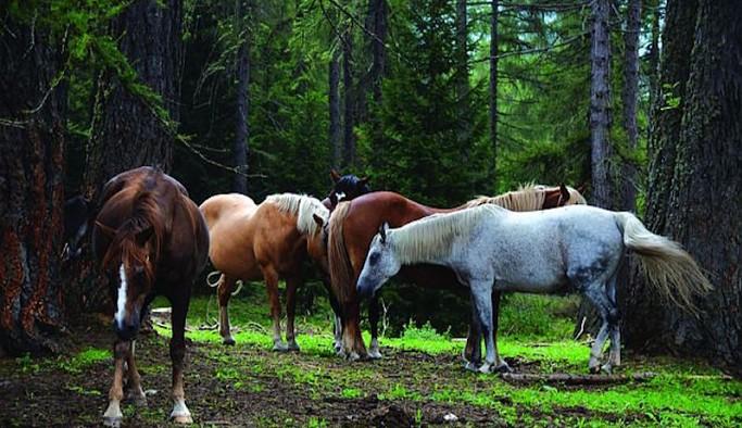 İBB'den kayıp atlarla ilgili yeni açıklama: Bakanlığın genelgesi sorumluluğu İBB'den alıyor