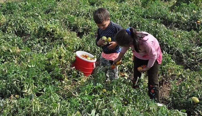Milli Eğitim Bakanlığı Meclis'te açıkladı: Türkiye'de 720 bin çocuk çalıştırılıyor
