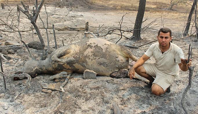 Manavgat yangınında her şeyini kaybeden çiftçi: 3 gündür gelen giden yok, ağlamaktan sesim kalmadı artık