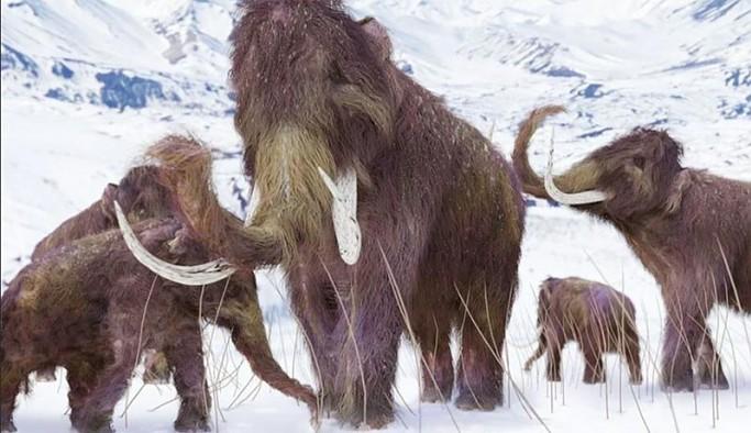 Yok olan yünlü mamutları geri getirme projesi 15 milyon dolar yatırım aldı