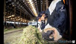 Bu da bir başka Çiftlik Bank vurgunu: 120 milyon toplandı, sistem çöktü!