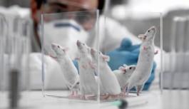 Sosyal medyaya ilişkin araştırma: 'Beğen'i kovalayanlar ile laboratuvar farelerinin davranışı benzer
