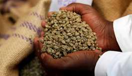 Kaliforniya mahkemesi kahve şirketlerinin ürünlerine 'kanser uyarısı' kararını aldı