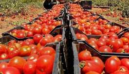 Rusya ve Türkiye'nin domatese ortak denetimi 10 Mayıs'ta başlıyor