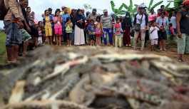Endonezya'da timsah saldırısında ölen kişinin intikamını yaklaşık 300 timsahı öldürerek aldılar