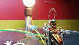 Hamam böceğini elektrikli sandalyede idam eden heykeltıraş: Çalışma masam kirlenebilirdi