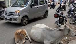 Hindistan'da bir Müslüman, inek yüzünden...