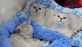 Kedi beslemenin yasaklandığı köy: Diğer canlılara zarar veriyorlar