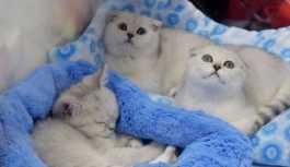 Şam'da kedilere özel otel