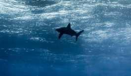 Yeni Zelanda'da kıyaya vurmuş dev mürekkep balığı bulundu