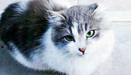 Yavru kediye tecavüz davasında tahliye kararı