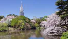 Japonya'da turistlerden korkan görevli, ücret almayınca...