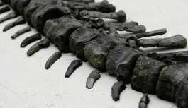 Arjantin'de bilinmeyen bir dinozor türünün kemikleri bulundu