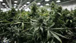 Tayland'da marihuananın tıbbi amaçlı kullanımı yasallaşıyor