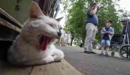 Rusya'nın 'kedi şehrinde' bu kez de kedili trafik lambası yapıldı