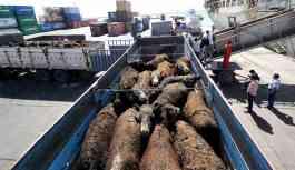 Hayvan ithalatındaki veteriner belgesi sahteymiş
