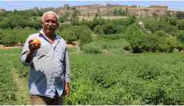 Hevsel Bahçeleri çiftçileri pazar yeri arıyor