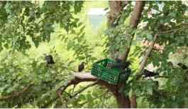 Teleferiği andıran düzenekle kuşları...