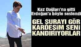 Akşener'den Erdoğan'a Kaz Dağları çağrısı: Gel kardeşim şurayı gör seni kandırıyorlar