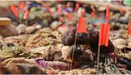 Irak'ta 170 Kürt'ün gömüldüğü toplu mezar bulundu