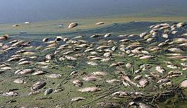 Atatürk Barajı'nda binlerce ölü balık kıyıya vurdu