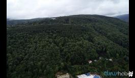 Teleferik için 3 bin ağaç kesilecek
