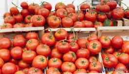 Rusya'nın 'kota doldu' gerekçesiyle almadığı 5 bin ton domates çöpe gitti