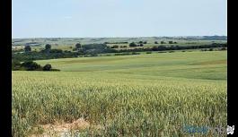 Bakan Pakdemirli: Hazine arazilerini tarıma açıyoruz