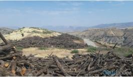 Cudi'de ağaç kıyımı kent yamacına ulaştı