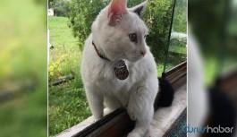 Engelli kedi 'sütlaç' silahla vurularak öldürüldü