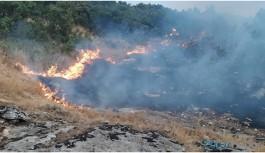 Lice'de 600 hektarlık alan kül oldu