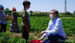 Tarlada çalışan çocukla poz veren Bakan'a tepki