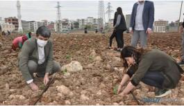 HDP'li belediye ekti, kayyım yedi!