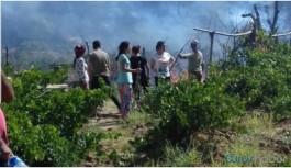 Lice'de çıkan yangın bağ ve bahçelere...