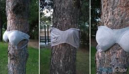 Parkta ağaçlara sütyen asıldı