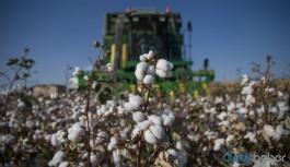 Türkiye; Uganda, Burkina Faso ve Suriye'den de pamuk ithal ediyor