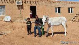 Mardinli çoban taksiti ödeyemezse eşeği elinden alınacak