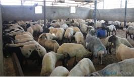 Çiftçi: Bakanı dinledik, batma seviyesine geldik
