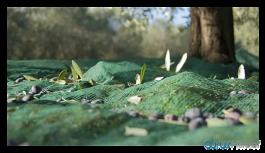 'Tarım Kredi, Afrin zeytinyağını ABD'ye pazarlamaya çalışıyor'