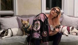 Lady Gaga'nın köpekleri çalındı: Geri getirene 500 bin dolar ödül vaat etti